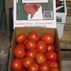 25 lb. box of round tomatoes