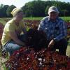 Michele and Dave check the red leaf lettuce.